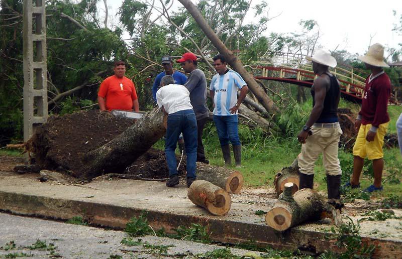 Árboles caídos, incluso arrancados de raíz, Cuba, después de paso del huracán Irma