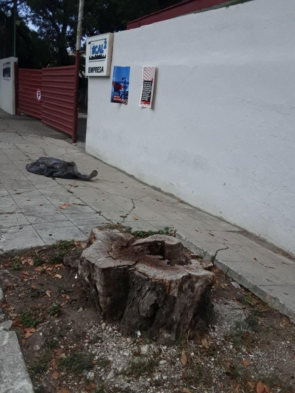 árbol talado habana
