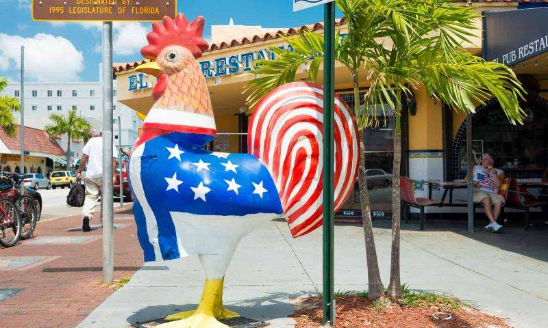 "Un gallo ""yuma"" en Miami."