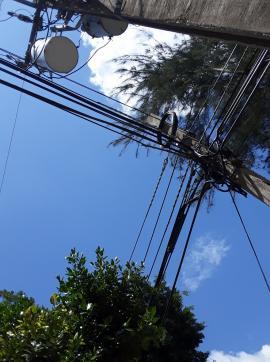 Cuba: arboles y tendido eléctrico