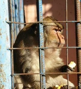 Mono del Zoológico de Venezuela